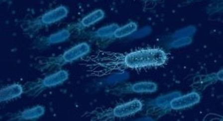 Kỹ thuật mới giúp vi khuẩn sản xuất điện hiệu quả hơn
