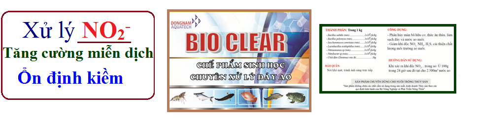 Men vi sinh xử lí khí độc NO2, NH3- Bio Clear