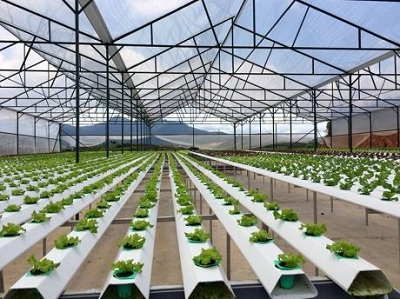 Chính sách hỗ trợ các doanh nghiệp đầu tư vào nông nghiệp, nông thôn