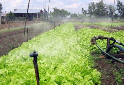 Áp dụng công nghệ tưới tiết kiệm nước cho cây trồng cạn