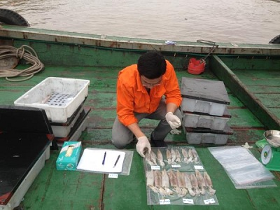 Hải Phòng: Mô hình ứng dụng công nghệ xử lý bảo quản mực ống