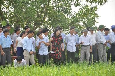 Xã Đại Thắng đón nhận nhãn hiệu chứng nhận gạo nếp cái hoa vàng